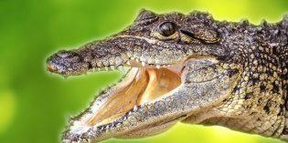 Notizen aus der Welt des Reisens: Krokodilstränen in Costa Rica, Reggae-Festival auf Jamaika