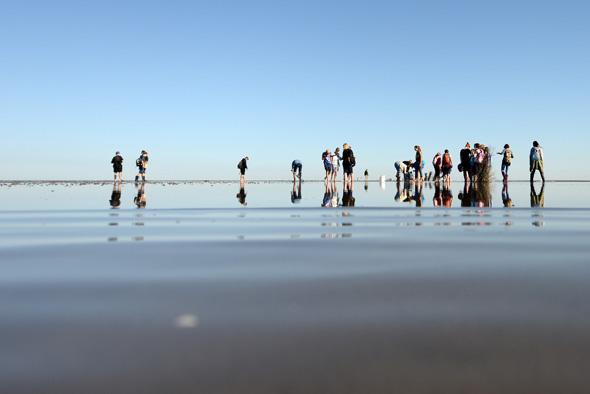 Auf geführten Wattwanderungen das Weltnaturerbe Wattenmeer vor Cuxhaven erkunden (Foto: Nordseeheilbad Cuxhaven)