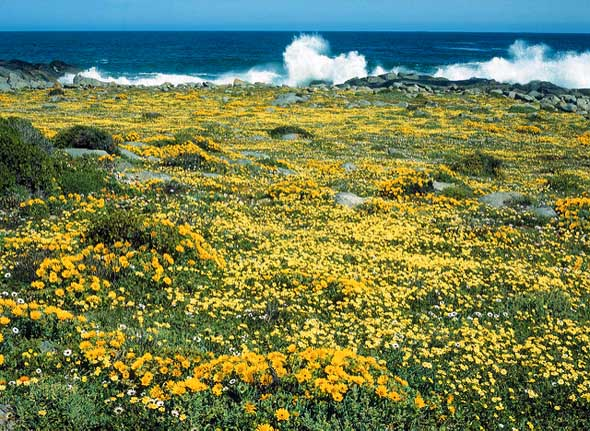 So abwechselungsreich wie Südafrika selber gibt sich die Flora des Landes.