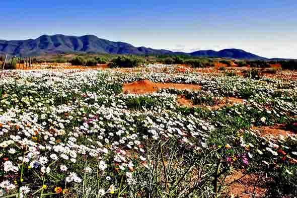 Das Blütenmeer weiß nicht nur Botaniker in Begeisterung zu versetzen.