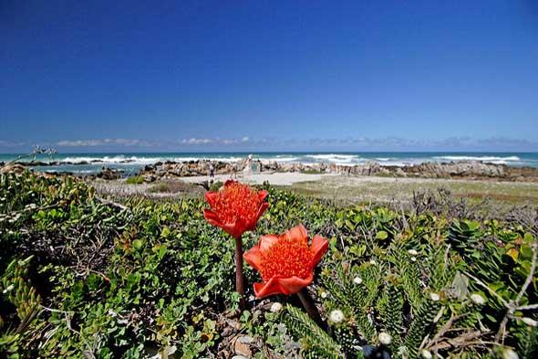 Die Pflanzenvielfalt Südafrikas kommt besonders während des europäischen Sommers zur Entfaltung.