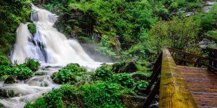 Lauschtour zu den Tannenriesenim Schwarzwald
