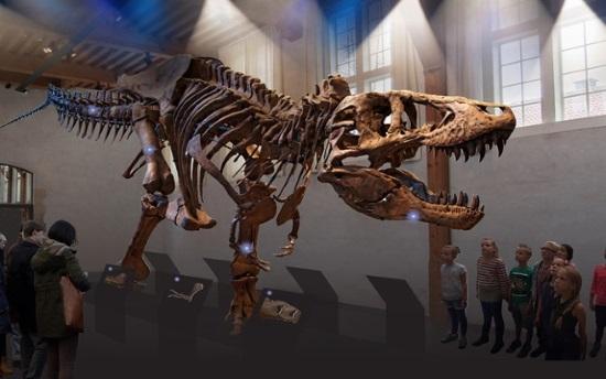 """Das Museum """"Naturalis"""" begrüßt ab September eine neue Saurierdame. (Foto Leiden Marketing)"""