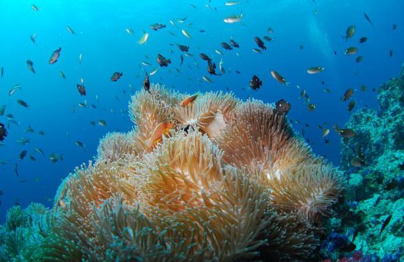 Vor allem die Koralleninsel Sipadan besticht mit einem bunten Unterwasserkaleidsokop.