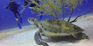 Die faszinierende Unterwasserwelt vor Malaysia