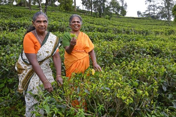 Sri Lanka ist als Heimat exzellenter Teesorten bekannt.