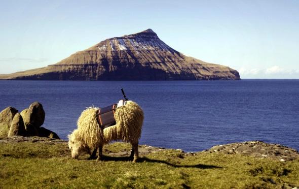 Mit der Kamera auf dem Rücken zeigen die grasenden Schafe ganz nebenbei die Inselwelt von Färöer.