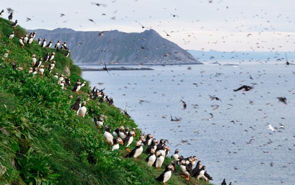 Die felsige Küstenlandschaft Finnmarks bietet großartige Naturschauspiele. (Foto Asgeir Helgestad)