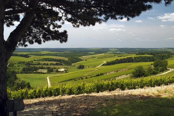 Auch landschaftlich ist die Champagne ein absoluter Traum. (Foto Aube en Champagne Tourisme)
