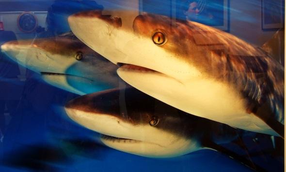 Stephen Frink setzt die Unterwasserfauna künstlerisch auf besondere Art und Weise um. (Foto Katharina Büttel)