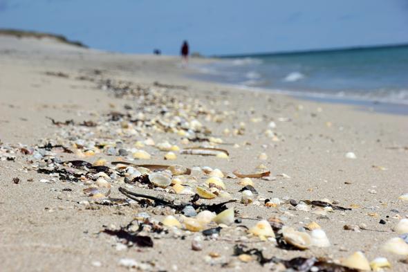 Die vielen Muscheln und Muschelfragmente gaben dem Shell Beach seinen Namen. (Foto Karsten-Thilo Raab)