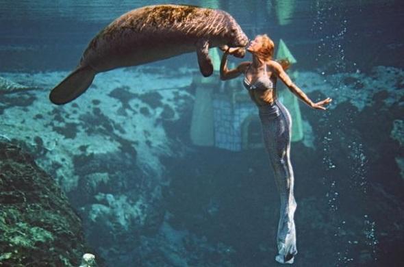Ein unvergessliches Bild: Meerjungfrauen auf Schmusekurs mit Manatees. (Foto Florida's Adventure Coast Visitors Bureau)