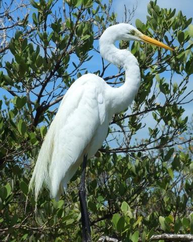 Überaus beeindruckend zeigt sich auch die Vogelwelt in diesem Teil Floridas. (Foto Katharina Büttel)