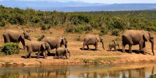 Mehr als nur die Big Five: Luxusreisen in Südafrika