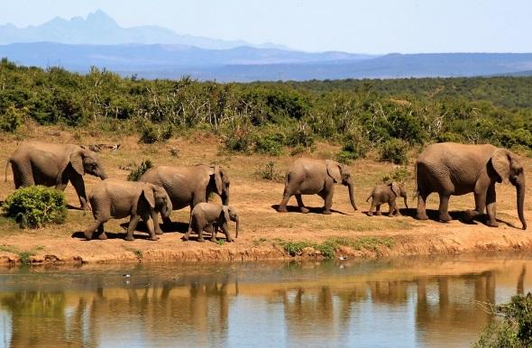 """Insbesondere rund um die Wasserlöcher ist die Chance groß, Elefanten und andere Tiere der """"Big Five"""" anzutreffen."""