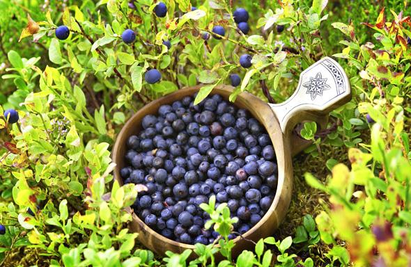 Das Jedermannsrecht erlaubt unter anderem das Sammeln von Beeren.