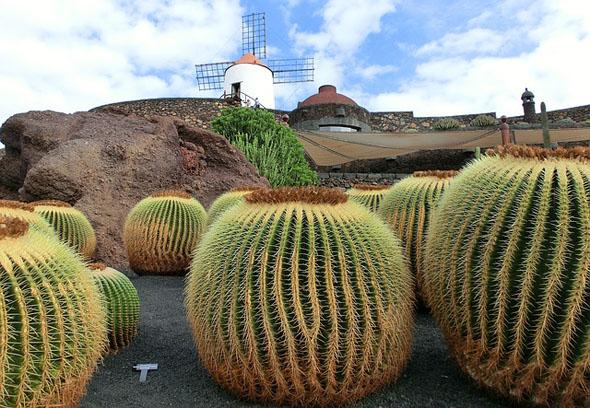 Die mächtigen Kakteen sind ebenfalls Teil des Inselbildes.