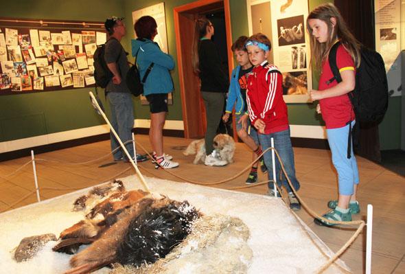 Im Museum wird anschaulich vor Augen geführt wie Ötzi gelebt hat und wie er ermordet wurde. (Foto Ulrike Katrin Peters)