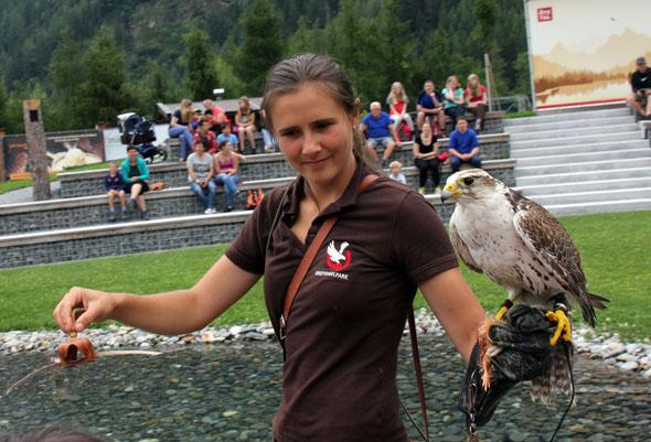 Bei der Greifvogelshow sind die Könige der Lüfte fast zum Greifen nahe. (Foto Ulrike Katrin Peters)