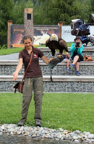 Nicht nur der mächtige Weißkopfadler weiß die Besucher zu beeindrucken. (Foto Ulrike Katrin Peters)