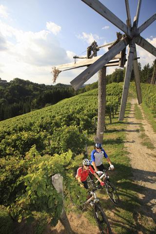 Weinstöcke, aber auch Weinproben gehören zur Tour durch die Steiermark. (Foto Harry Schiffer)