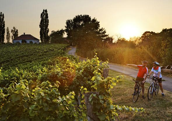 Auf rund 403 Kilometern führt die neue Weinland Steiermark Radtour vorbei an Weinbergen, Kürbis- und Apfelgärten, dem Naturpark Pöllauer Tal und dem Naturpark Südsteiermark. (Foto Bergmann)