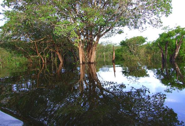 Prachtvoll, gewaltig und voller Leben: die Uferlandschaft im Wassernetz Amazoniens. (Foto Katharina Büttel)