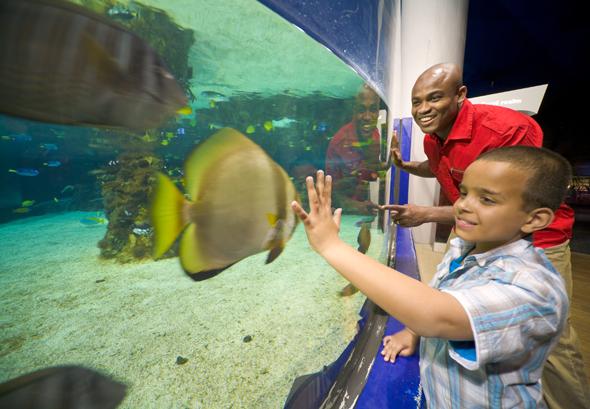 In The Deep sind Fische aus allen Teilen der Welt zum Greifen nahe. (Foto Visit Britain)