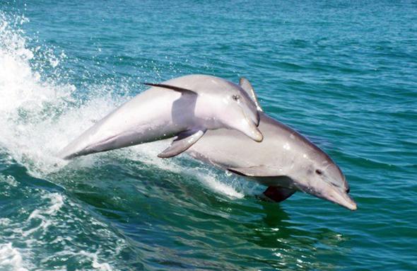 Wie hier bei Rockingham lassen sich Delfine teilweise auch von Land aus gut beobachten. (Foto Anouck Van Dyck)