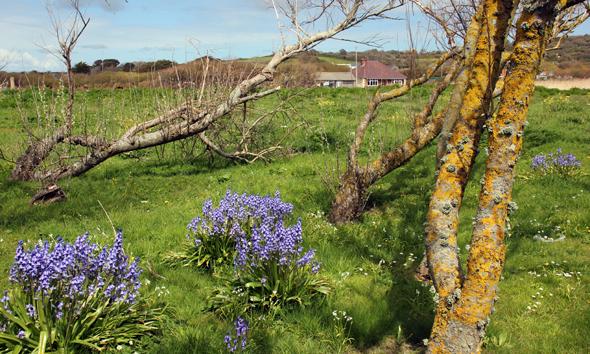 Auch im zum Teil dicht besiedelten Inland von Guernsey ist die Insel nicht ohne Reiz. (Foto Karsten-Thilo Raab)
