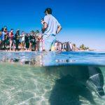 Abtauchen in Australien – Walhai auf Augenhöhe