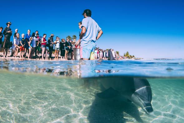 In Monkey Mia in Australien sind Begenungen mit Delfinen sogar direkt am Strand möglich. (Foto Elements MR)