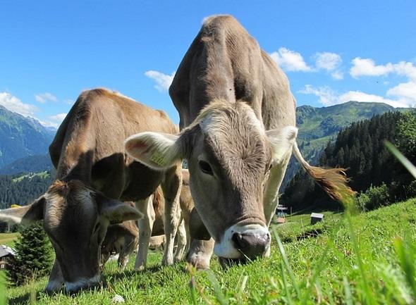 Bei Wanderungen durch die Liechtensteiner Bergwelt sind bis in den Herbst hinein tierische Begegnungen vorprogrammiert.