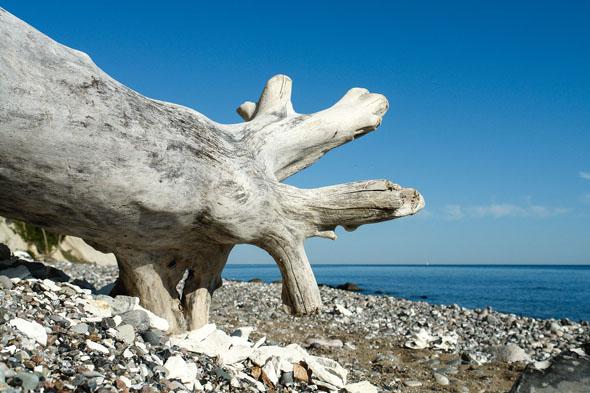 Für Fossilien-Sammler gibt es auf Rügen viel zu entdecken. (Foto: djd)