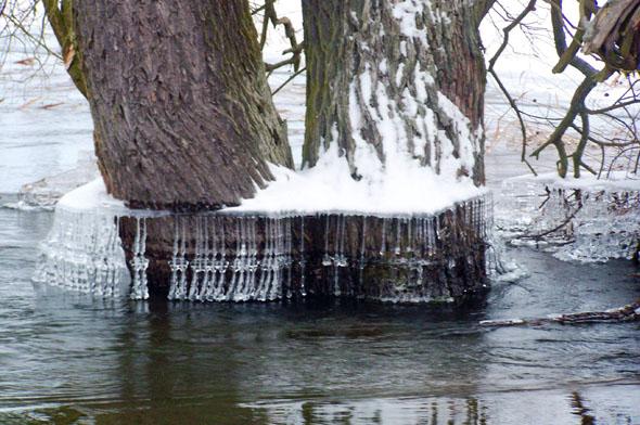 Ein Kunstwerk der Natur: Der schwankende Wasserspiegel verleiht dem Baumstamm einen Kragen aus Eis. (Foto: djd)
