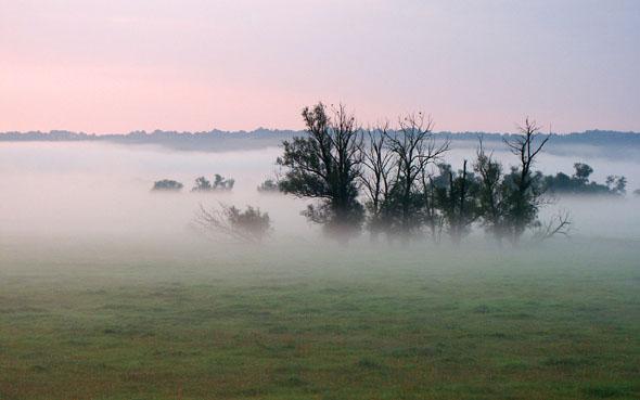 Morgennebel über dem Unteren Odertal, Deutschlands einzigem Flussauen-Nationalpark. (Foto: djd)