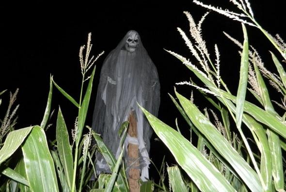 Zwischen riesigen Maispflanzen verstecken sich die legendären Wendigo-Geister.