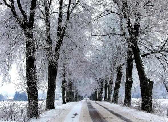 Masuren von seiner schönsten winterlichen Seite: eine Prachtallee im Schnee bei Olsztyn. (Foto Katharina Büttel)