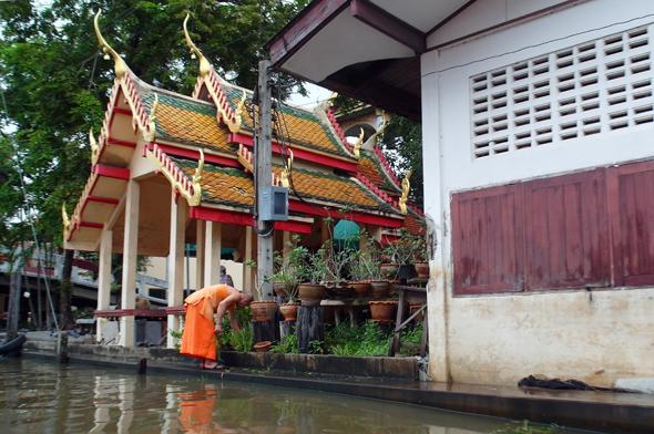 Vor den Tempeln am Ufer des Khlong Bang Luang sind Karpfen als heilig geschützt. (Foto Karsten-Thilo Raab)