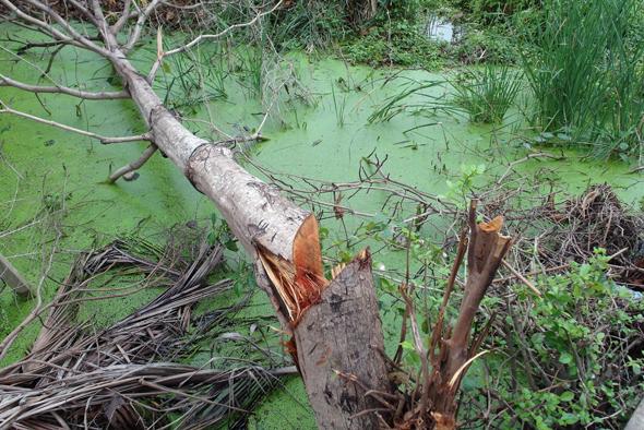 Im Sumpfgebiet des Thonburi Districts kreucht und fleucht es überall. (Foto Karsten-Thilo Raab)