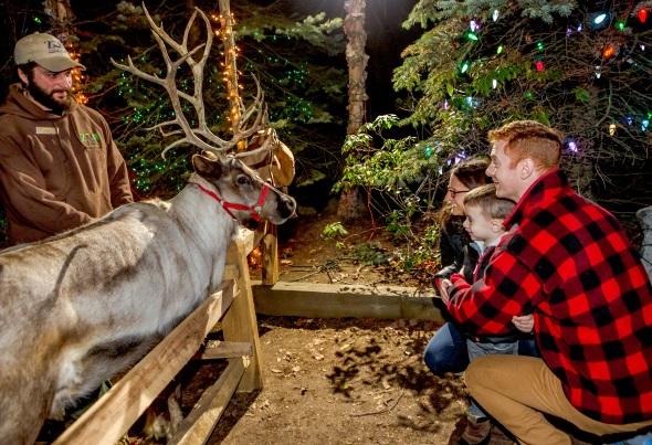 Ein Treffen mit den Rentieren des Weihnachtsmanns im Stone Zoo. (Foto Mike Discin)