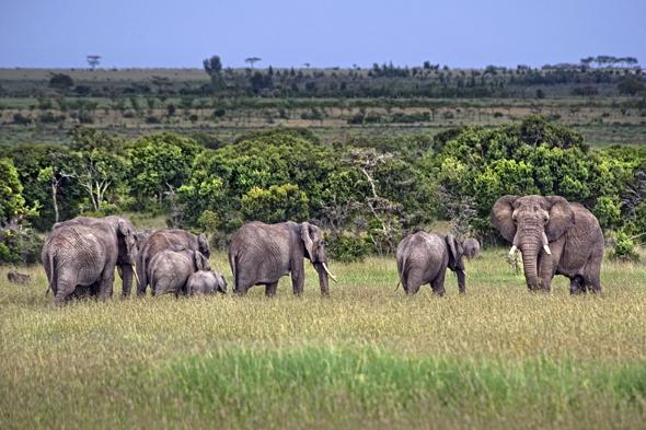 In Kenia ist es nun noch günstiger, die Nationalparks mit ihrer faszinierenden Fauna zu besuchen. (Foto Kenia Tourist Board)