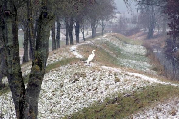 Das Vogelparadies am Isarmündungsgebiet. (Foto Michael Körner)