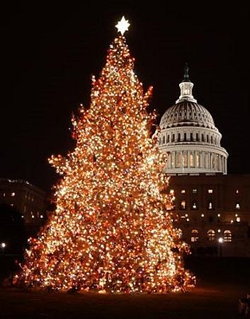 Prächtig illuminiert: der Weihnachtsbaum am Capitol. (Foto Destination DC)