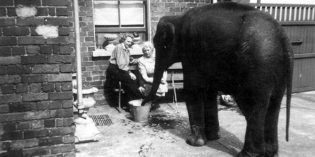 Filmreif: Geschichte vom Elefanten-Engel
