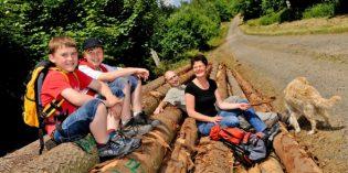 Den Harz neu entdecken – von Osterode über die schönsten Etappen der Deutschen Fachwerkstraße