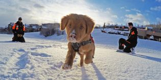 Lawinenhunde in Aspen: Kaltschnäuzig, effizient und einfach zum Knuddeln