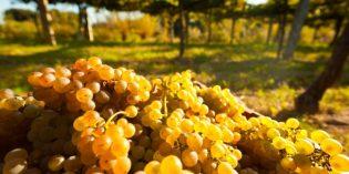 Cambados – Europäische Weinhauptstadt 2017