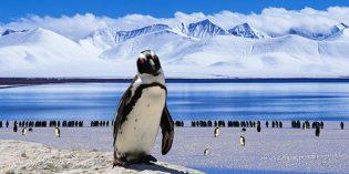 Zeitreise ins ewige Eis: Auf Entdeckungstour in der Antarktis