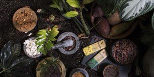 Expedition auf die süße Tour: Schätze des Regenwaldes genießen–mit Gewinnspiel